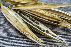 秋葵种子,秋葵产物种子,播种的秋葵种子, 免版税库存照片