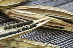 秋葵种子,秋葵产物种子,播种的秋葵种子, 库存图片