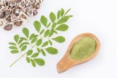 种子、辣木科-含油椒木属叶子和种子  免版税库存照片
