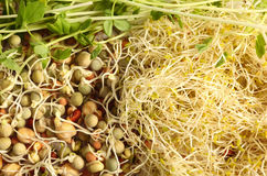 种子发芽了 免版税图库摄影