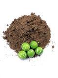 种子土壤 库存图片