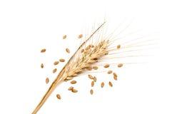 种子峰值麦子 库存图片