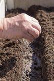 种子播种在准备的犁沟的 免版税库存照片