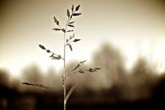 种子春天 库存照片