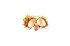 种子红毛丹 免版税库存图片