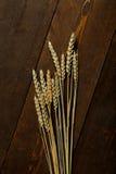 种子麦子 图库摄影