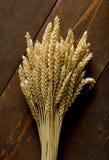 种子麦子 库存照片