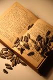 种子 库存图片