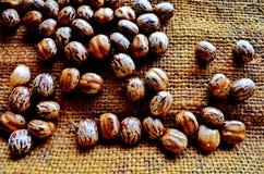 种子 免版税图库摄影