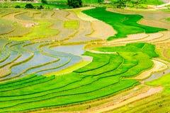 种族人民的米大阳台秀丽种植的季节 免版税库存图片