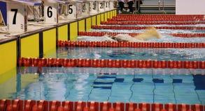 种族游泳 免版税库存照片