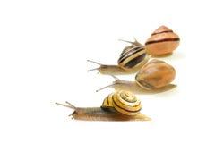 种族蜗牛 库存图片