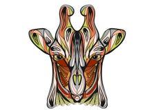 种族长颈鹿 库存图片