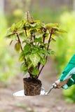 种植一朵花到地球里 免版税图库摄影