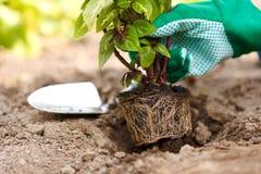 种植一朵花到地球里 图库摄影