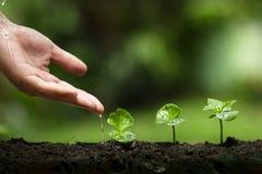 种植一棵树,保护树,手帮助树,生长步,浇灌树,关心树,自然背景 库存图片