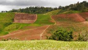 种植与热带植物包括香蕉树在波多黎各的山 免版税图库摄影