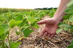种植五谷麦子一个创新方法,大豆,玉米 韩 图库摄影