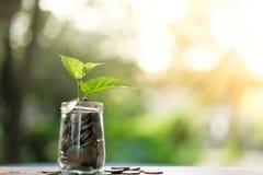种植充分生长从瓶子在木桌上的硬币 免版税库存图片