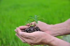 种植农业 生长工厂 种植幼木 培养和浇灌年轻婴孩的手种植生长在fert的萌芽 库存图片