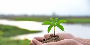 种植农业 生长工厂 种植幼木 培养和浇灌年轻婴孩的手种植生长在fert的萌芽 免版税库存图片