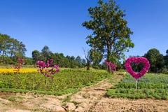 种植农作物波斯菊和万寿菊 免版税图库摄影