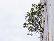 种植出生在大理石山裂缝  免版税库存照片