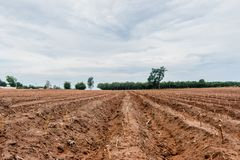 种植区域或木薯农田的木薯 免版税库存照片