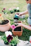 种植喇叭花植物 免版税库存图片