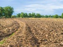 种植园和菜领域 免版税库存图片