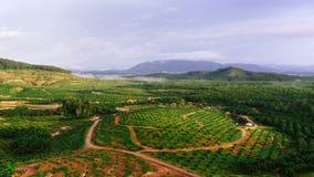 种植园在村庄 免版税库存照片