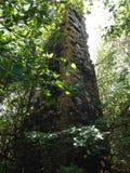 种植园废墟 库存图片