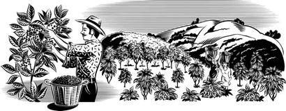 种植园的咖啡工作者 库存图片