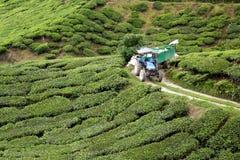 种植园茶工作 库存图片