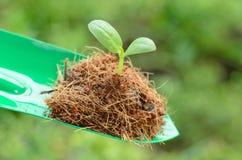 种植园:在绿色背景的年幼植物 免版税库存图片