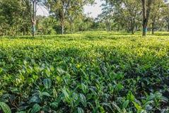 种植园/植被风景视图 库存照片
