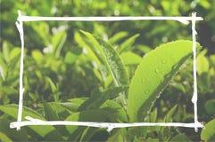 种植园绿色环境保护框架概念 免版税图库摄影