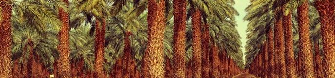 种植园 免版税库存照片