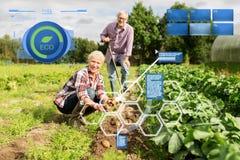 种植土豆的资深夫妇在庭院或农场 库存照片
