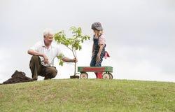种植在公园家庭统一性的祖父和孩子树 库存图片
