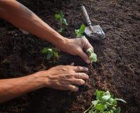 种植在土土壤的人们年轻树与园艺工具用途 免版税图库摄影