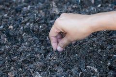 种植在土壤的手一颗种子 图库摄影
