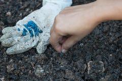 种植在土壤的手一颗种子 库存图片