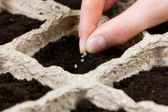 种植在地面或土壤的妇女手种子 春天播种 免版税库存照片