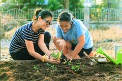 种植在家庭菜园领域的母亲和年轻女儿菜 免版税库存照片
