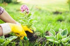 种植在有土或土壤的罐开花 免版税库存照片