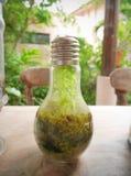 种植在电灯泡的玻璃容器 免版税图库摄影