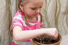 种植在罐的女孩种子在桌上 免版税图库摄影