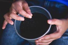 种植在罐的孩子种子 免版税库存图片