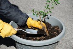 种植在罐的花 免版税库存照片